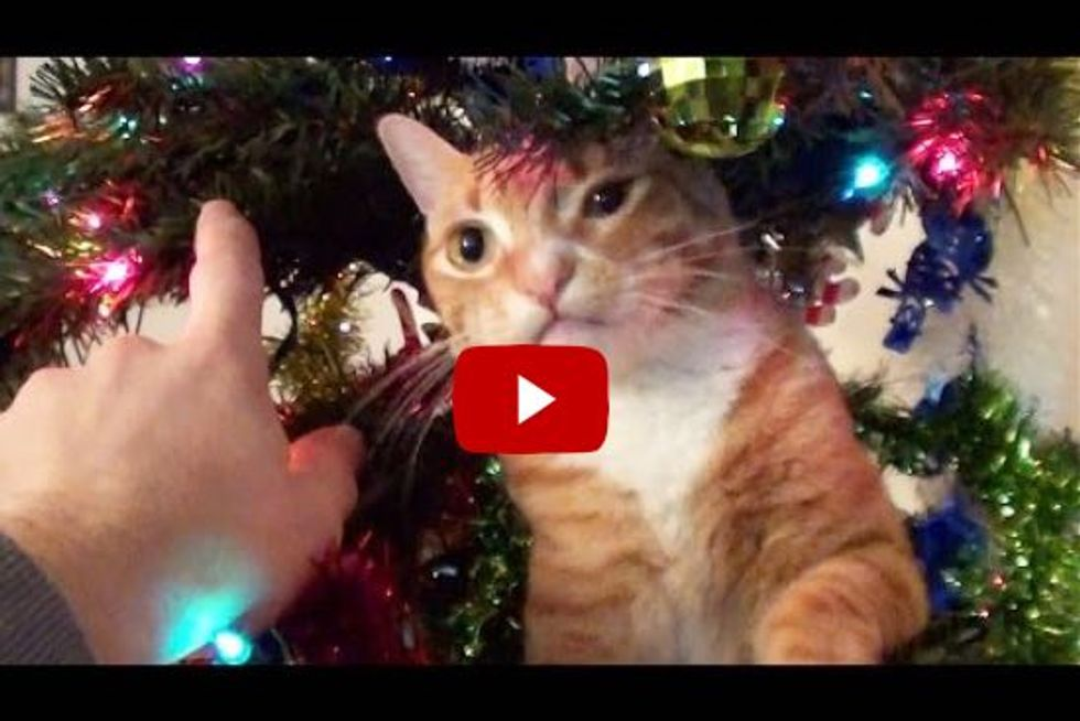 Decorating a Christmas Tree with Cats Around!