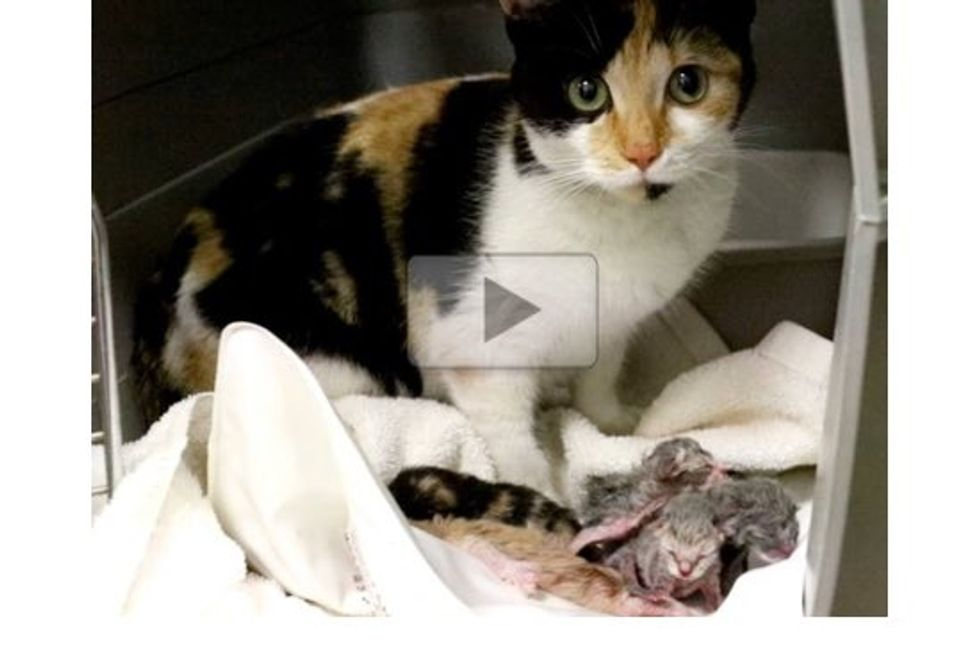 Homeless Pregnant Cat Rescued From The Streets and Cold