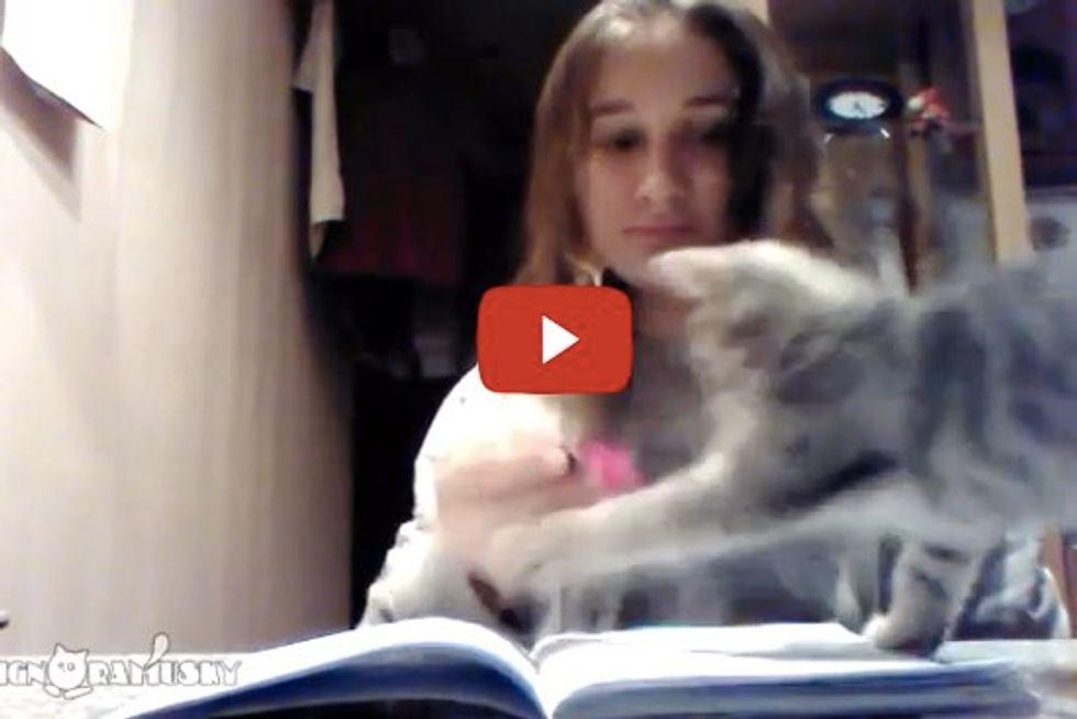 Doing Homework With Cat Around