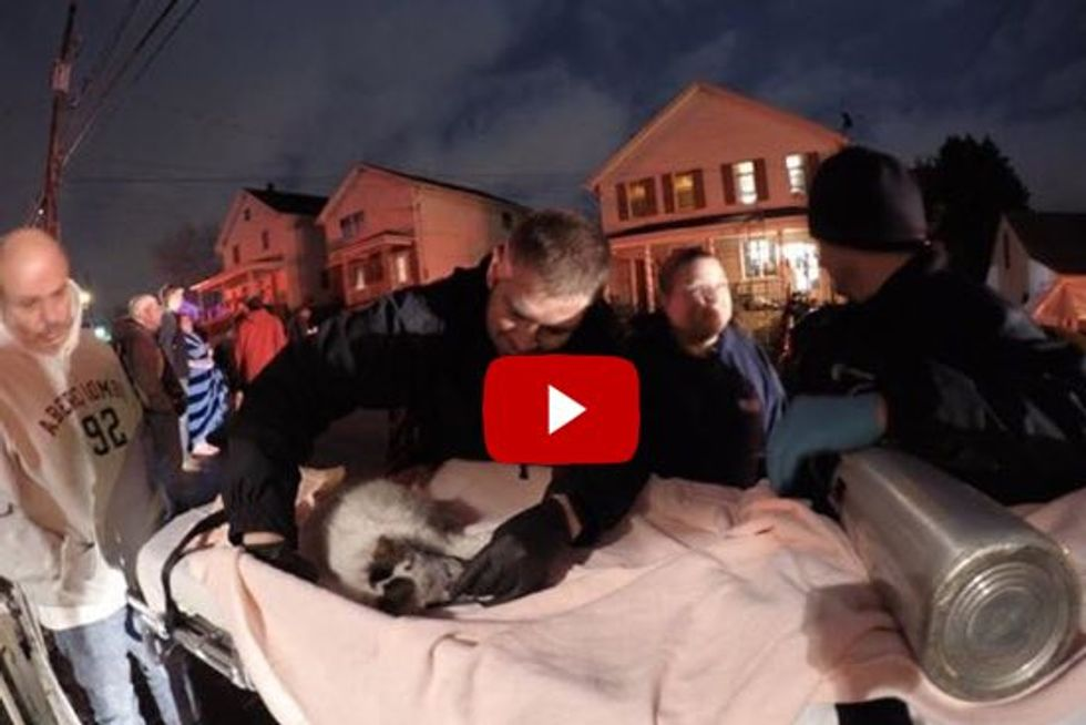 Firefighters Rescue And Revive Cat From House Fire