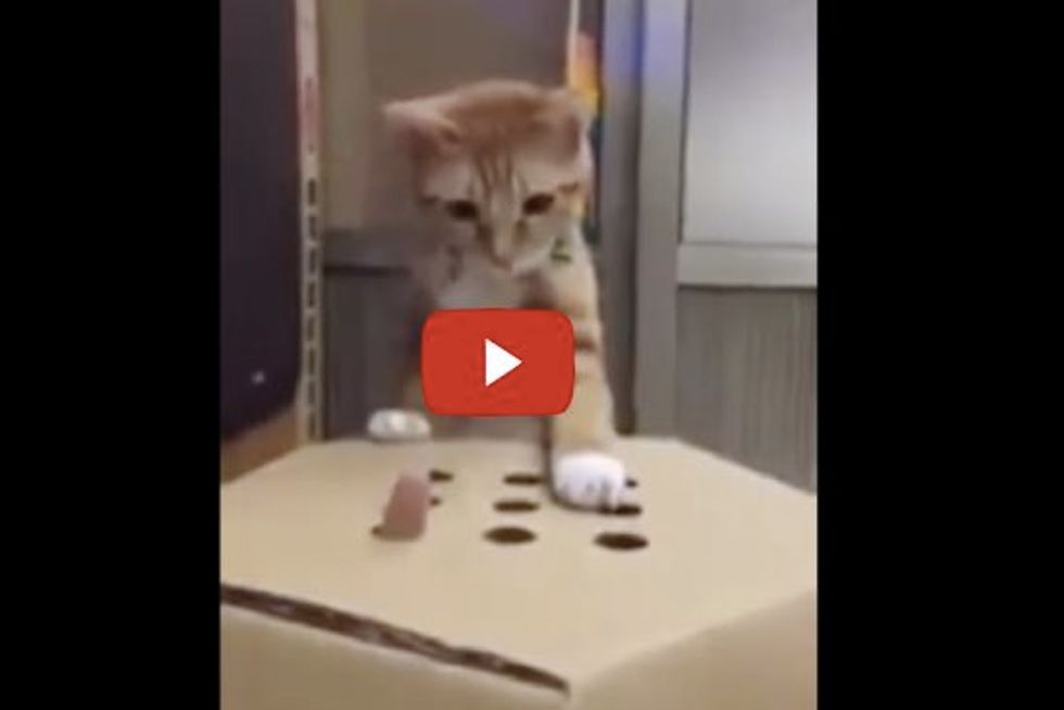 Cat Plays Whack A Mole