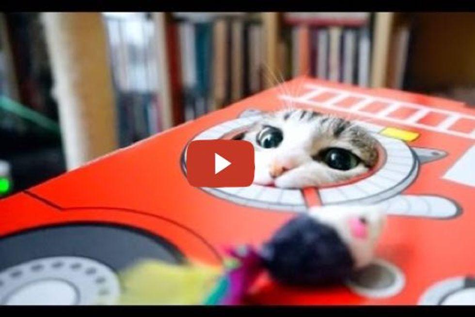 Smart Ohagi The Cat