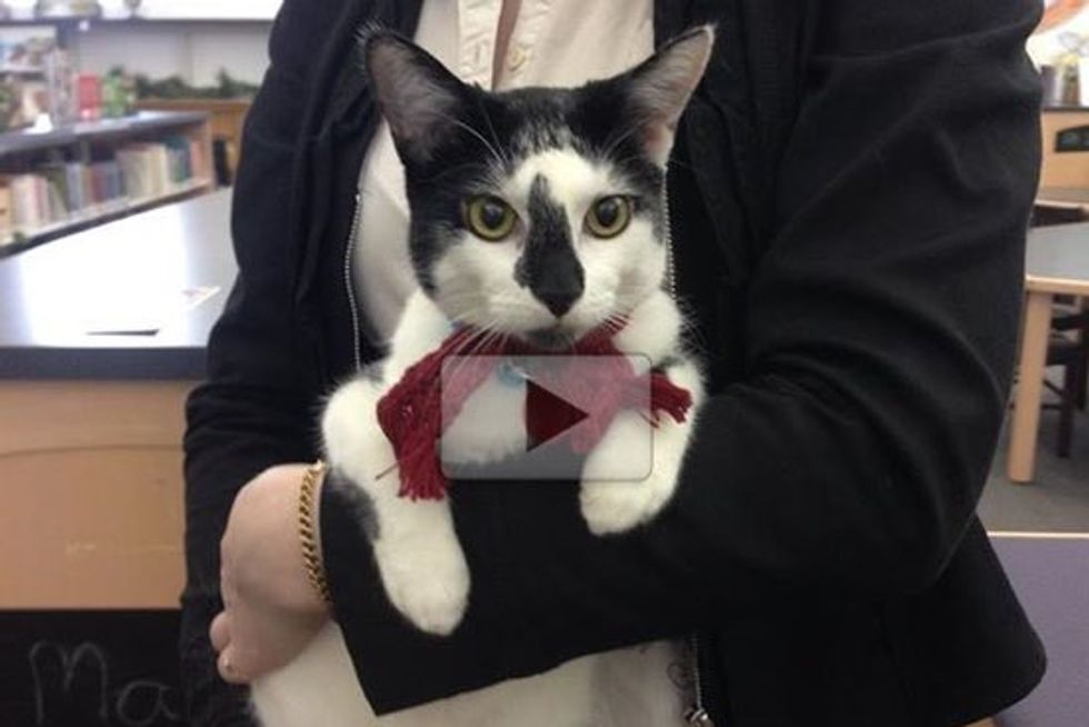 Sasha the Stray Cat Finds New Home At Two Libraries