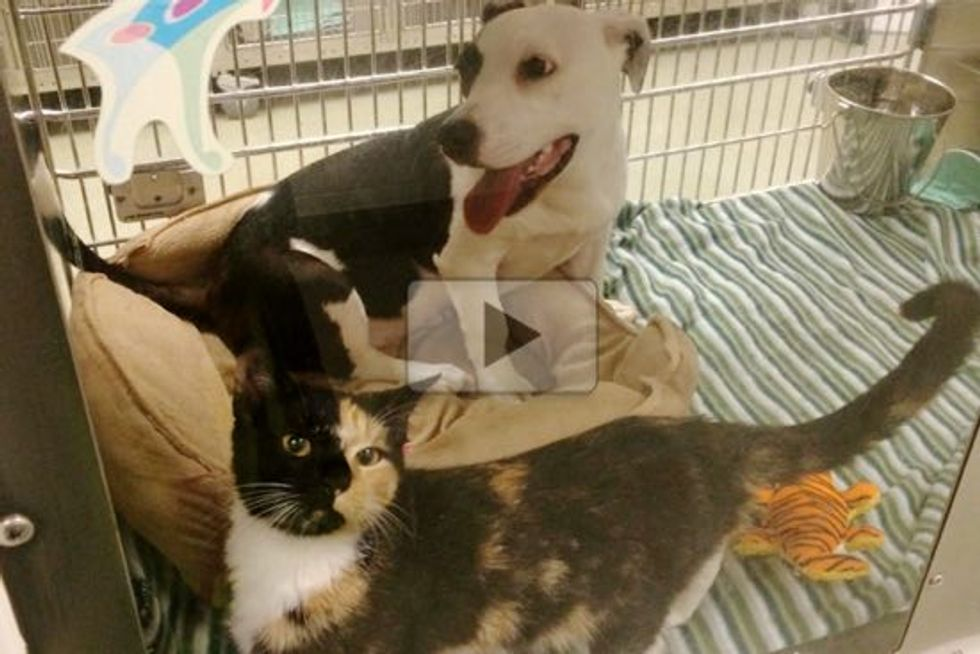 Dog and Cat Found Together As Strays Share Lifelong Friendship