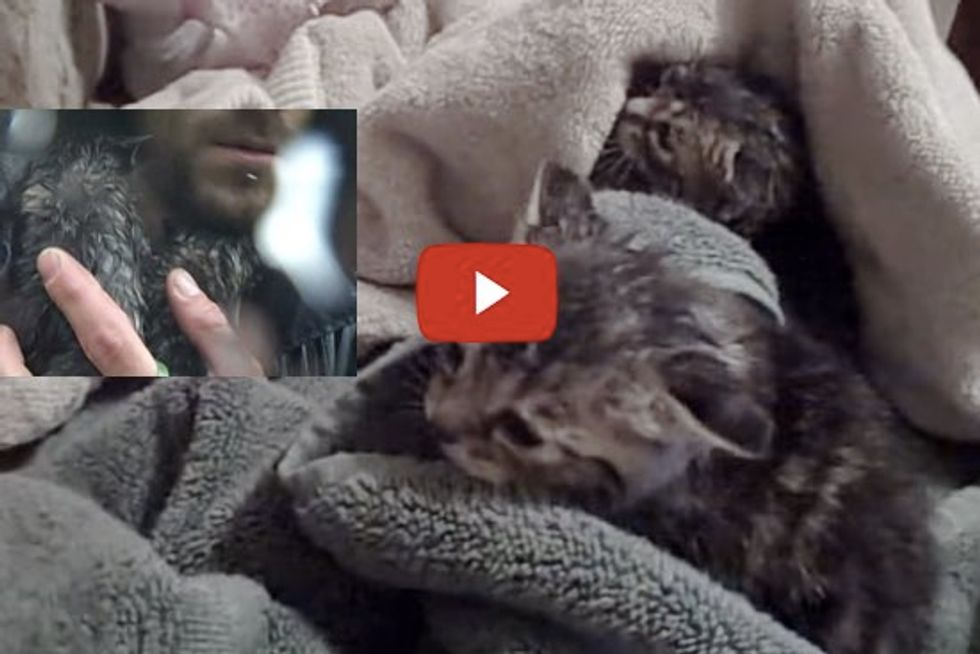 Kittens Rescued From Flood Water - Amazing Footage