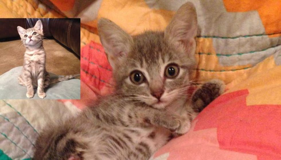 Rescue Kitten Makes Do With Two Paws