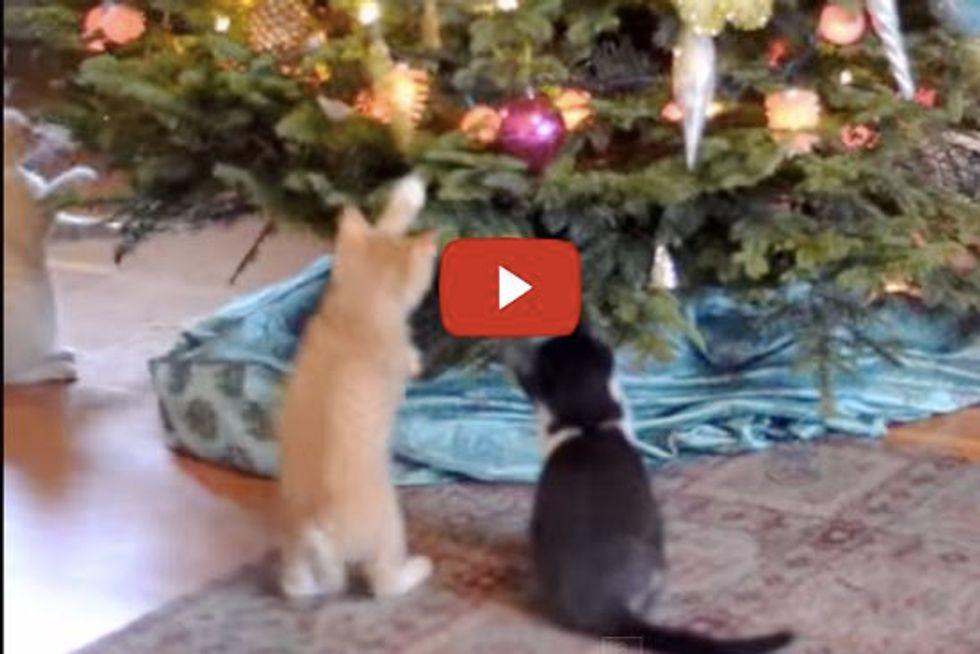 Kittens Jingle Bells
