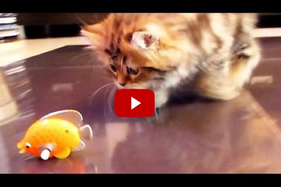 Cats Discover Something 'Fishy'