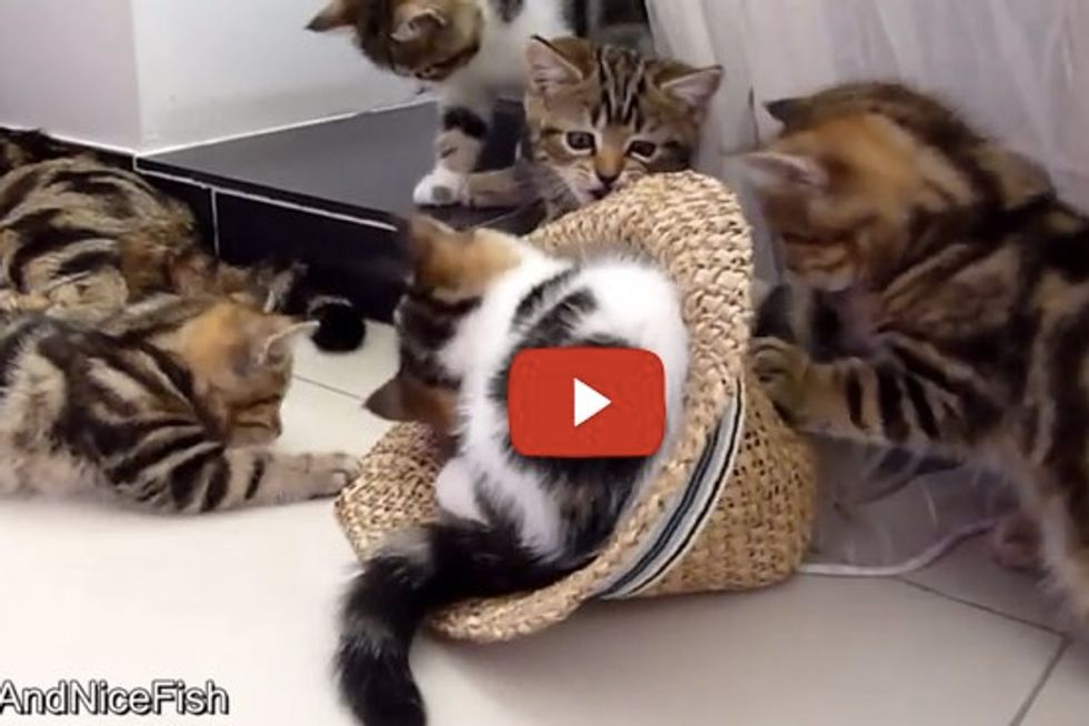 When These Kittens Find A Hat...