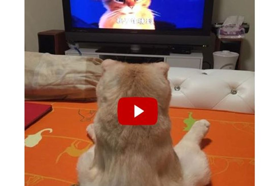 Cat Doesn't Want To Miss The Best Part Of Her Favorite TV Show