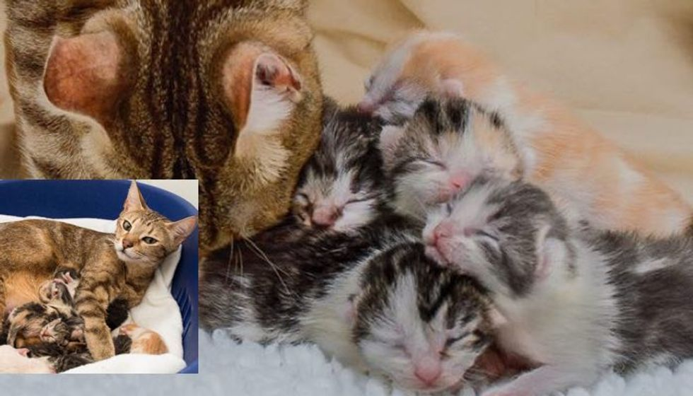 Sweet Rescue Cat Mother Gave Birth to 10 Baby Kittens