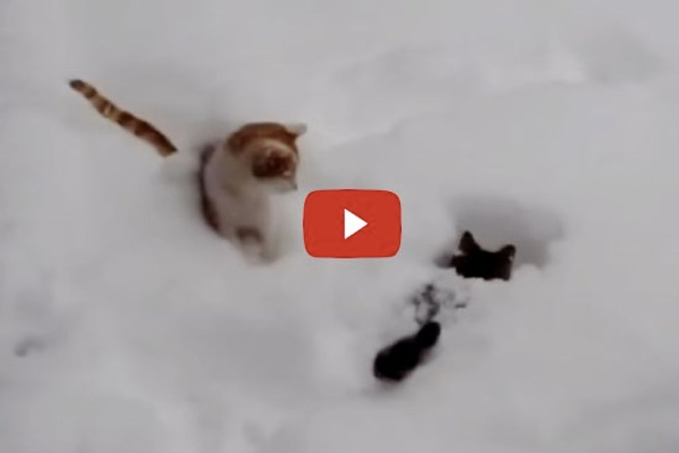 Cats Having a Great Time Playing in Snow