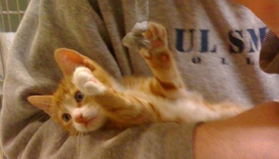 1 Pound Rescue Kitten 'Tiny' Turns into Majestic Cat!