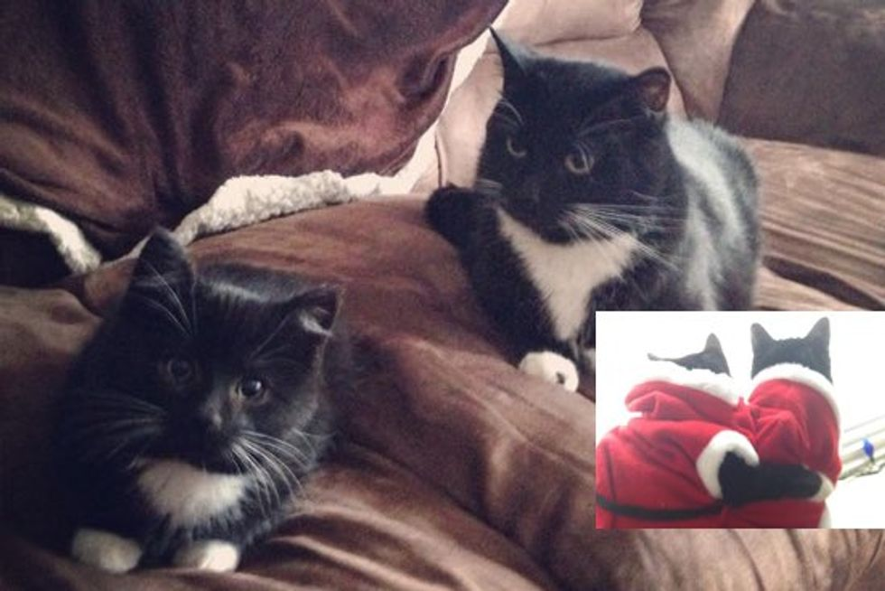 Rescue Kitten Home For Christmas, With New Sister Cat that Looks Like Him