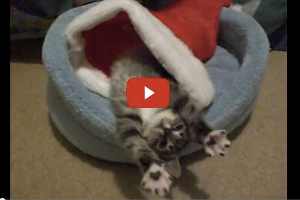 Kitten Waking Up in His Christmas Hat