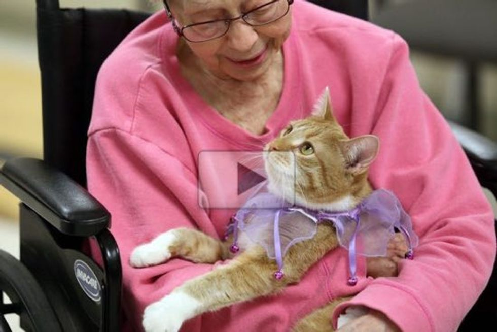 Mia the Tendercare Ginger Cat Brings Smiles To People at Assisted Living Facility This Holiday