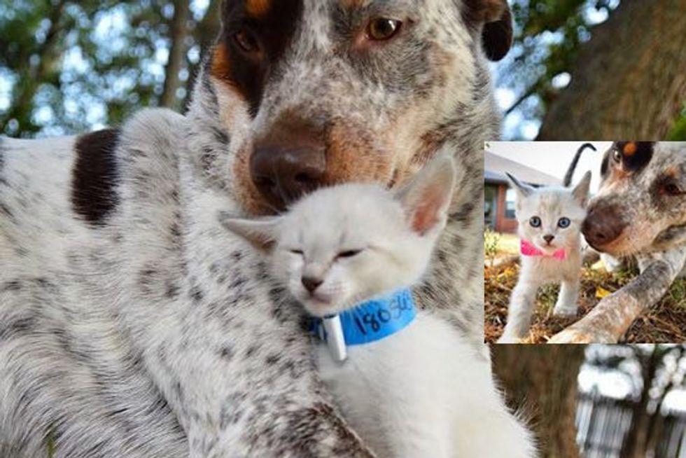 Little Foster Kitten Finds A New Mom