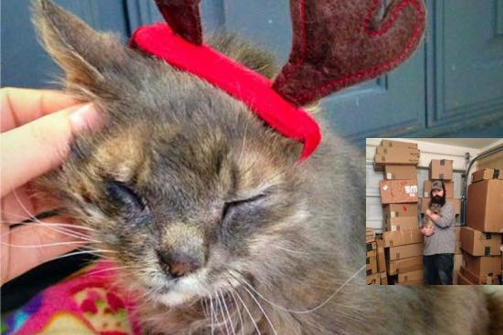 Blind And Deaf Reindeer Cat Gets Love And Gifts This New Year!