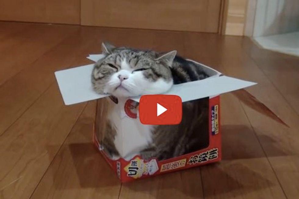 Maru and Round Rice Cake Box