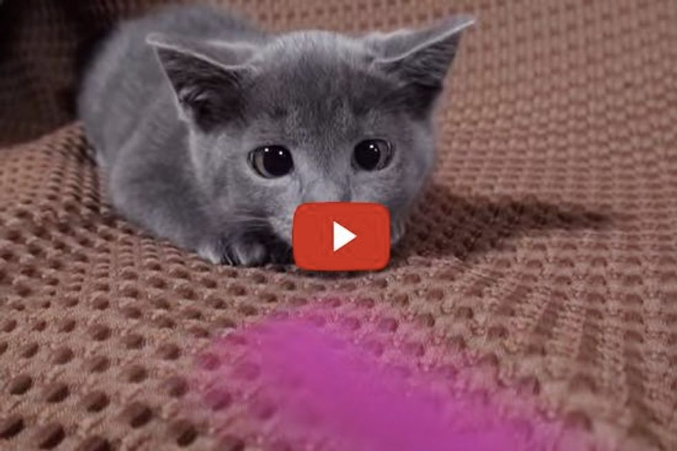 Kitten in Hunting Mode, Ready to Pounce