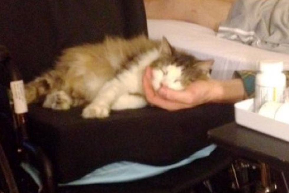Cat Stays By His Human Dad and Comforts Him with Purrs After He's Home from Hospital