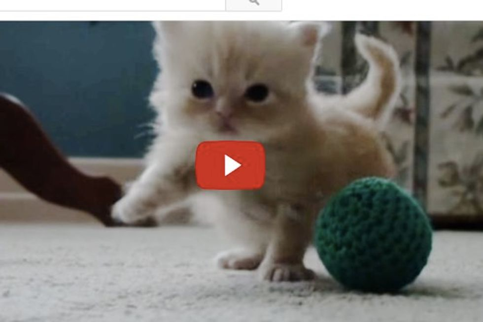 Tiny Kitten Copper Learning How to Walk