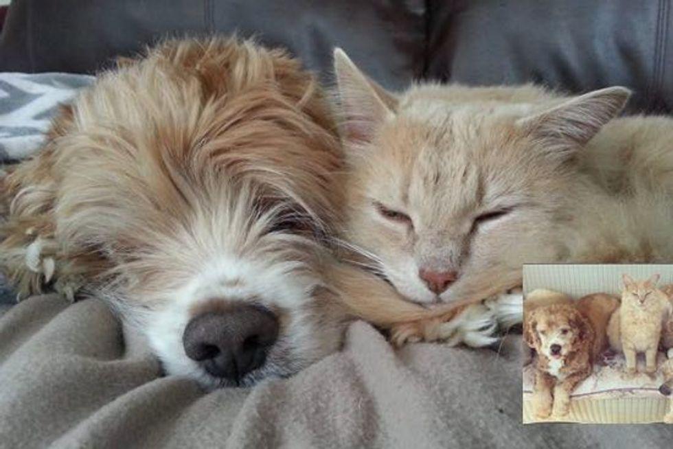 Rescue Farm Cat Loves His Blind Senior Dog Buddy