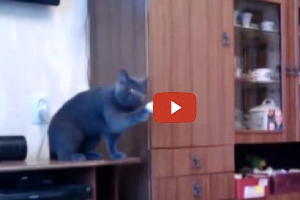 Cat Playing Ping-pong Tetherball