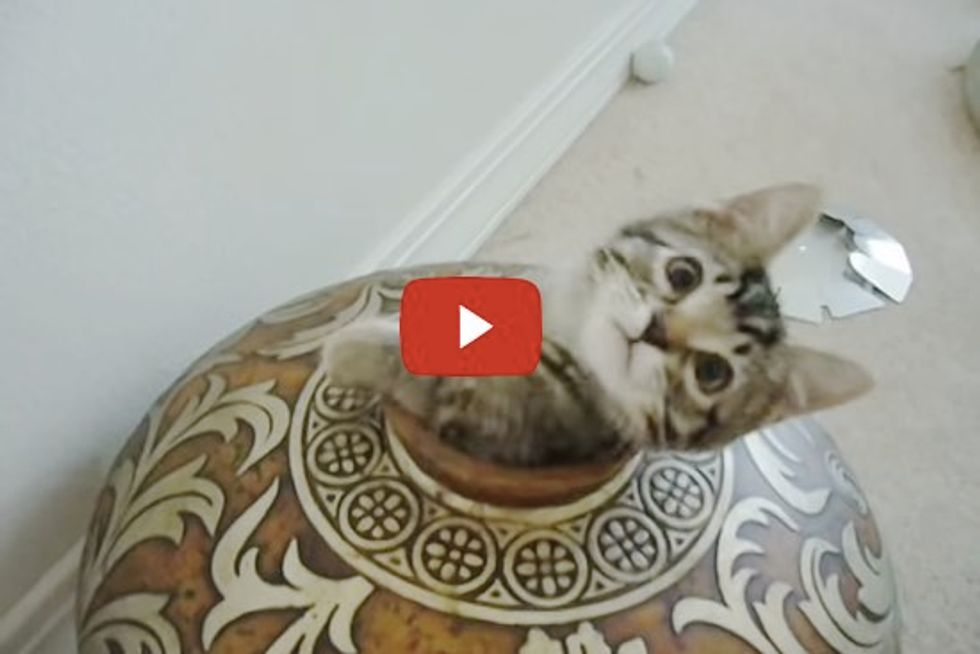 Two Kittens Want to Hide in a Vase, but They Don't Want to Share
