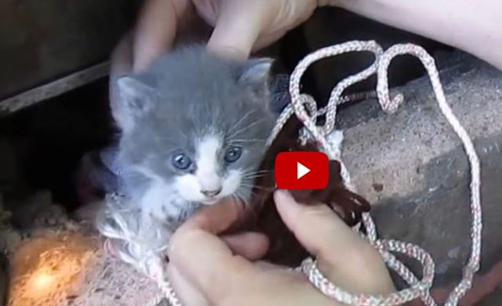 Two Men Rescue Baby Kitten and Reunite Him with Cat Mother