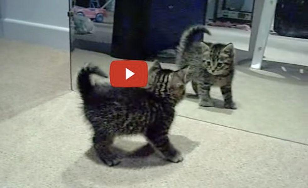 Kitten Discovers Little Intruder in the Mirror