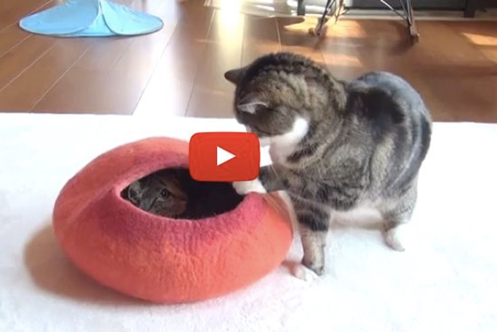 Maru and Hana Fighting over Red Bed