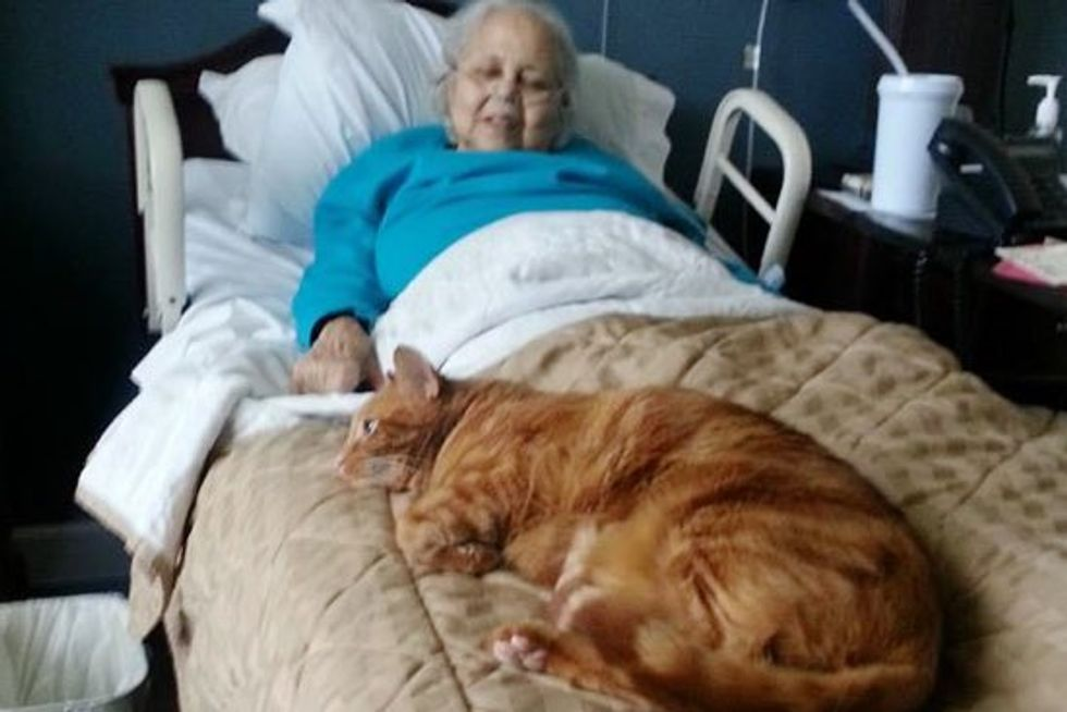 Cat Misses Grandma who Checked into Rehab Facility. They Sneak Him in to See her