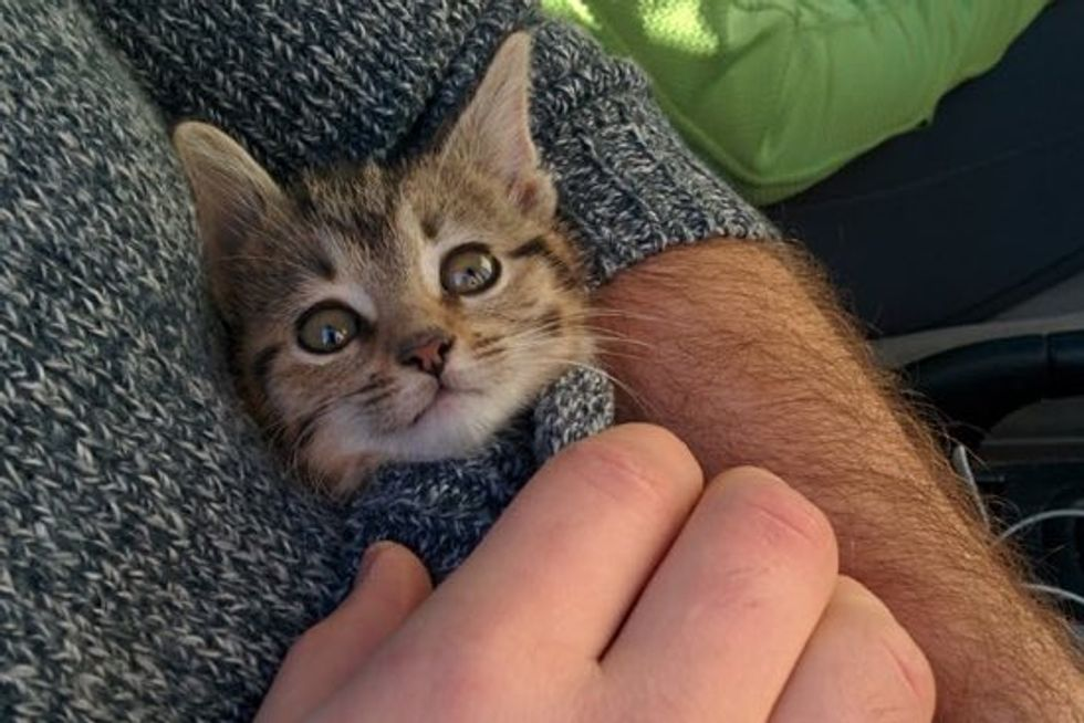 Employees Save Kitten Crying Outside an Office