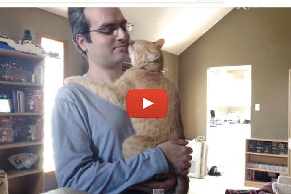 Garfield the Very Needy Cat Hugs and Follows His Human Around