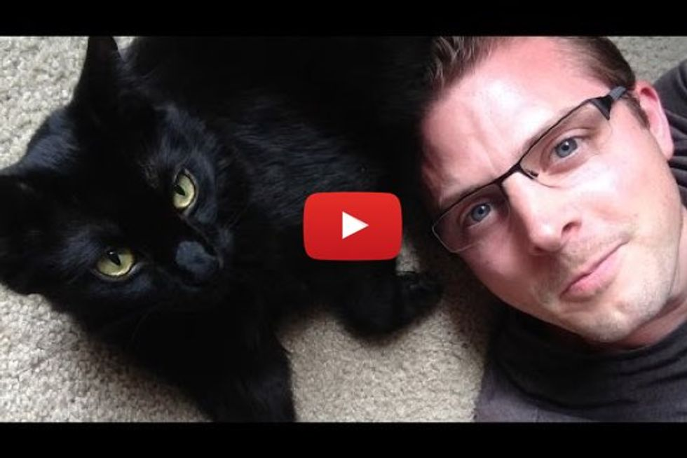 10 Signs You're a Crazy Cat Person!