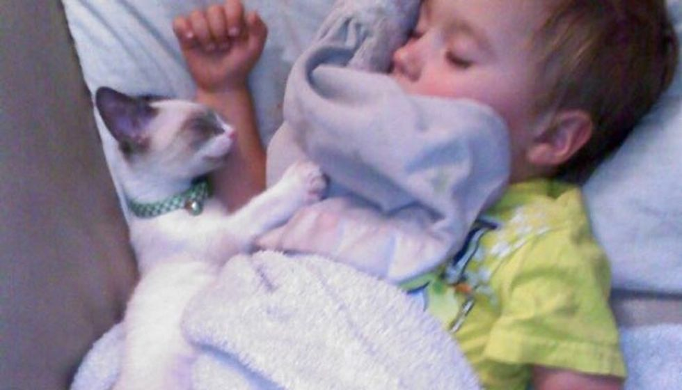 Kitten and His Little Human Do Everything Together, Always Together