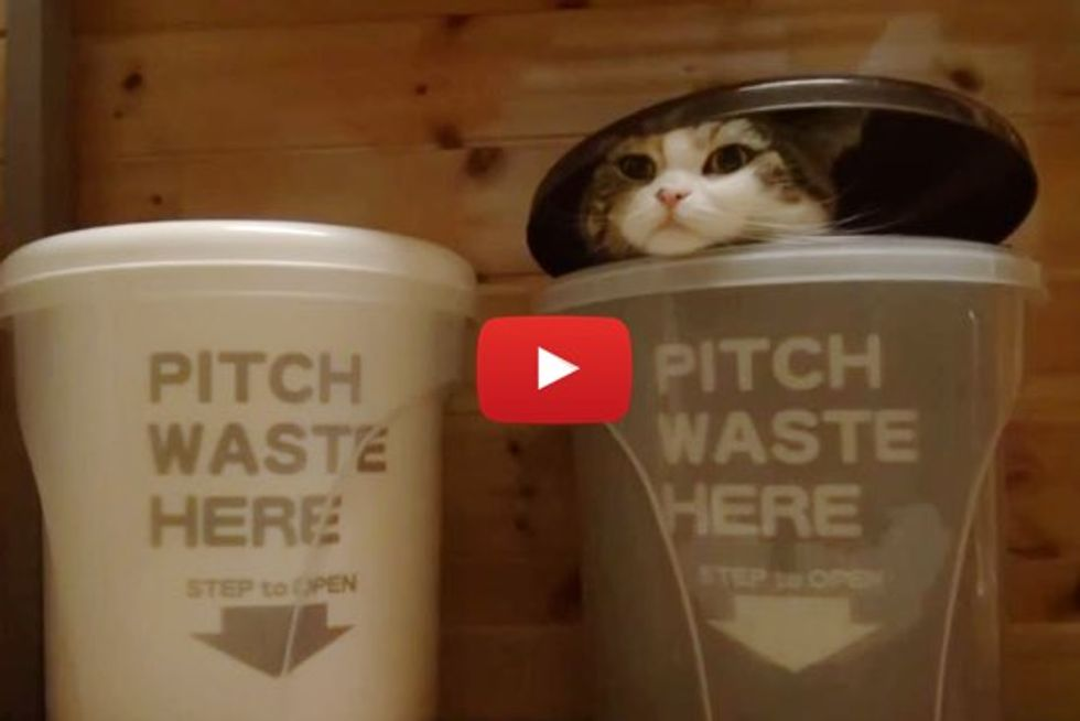 Watch as Maru Hides in a Trash Can and Hana Comes to Find Him