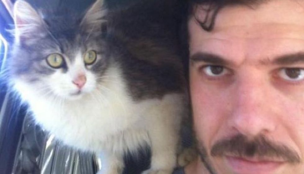 Stray Cat Comes Up to Man for a Pat and a Home