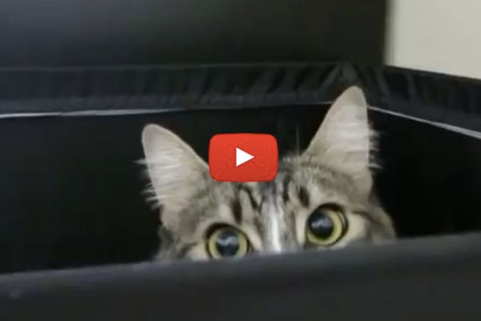 Cats Hiding Spots. Watch Why It's Hard to Find Our Kitties Sometimes