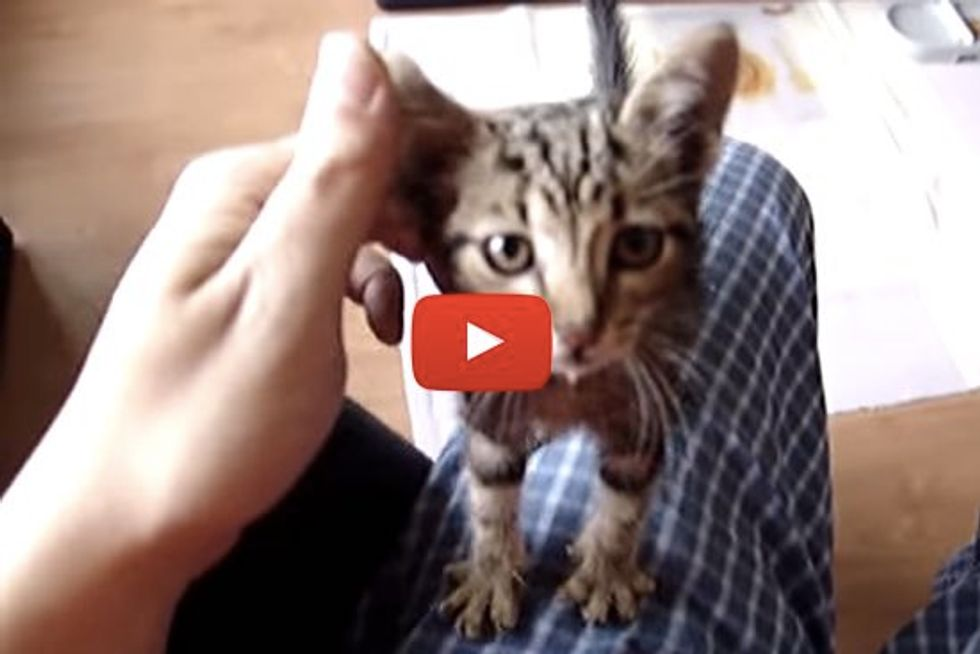 Thankful Rescue Kitten Gives Rescuer Love and Snuggles