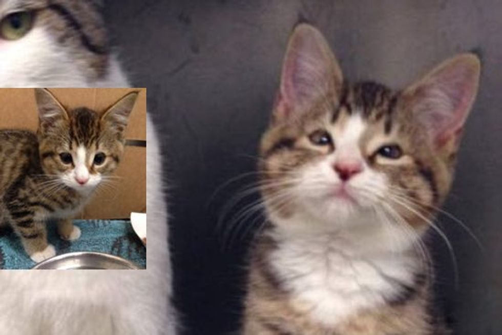Homeless Kitten Phil Born without Eyelids Can See Again after Life-changing Surgery