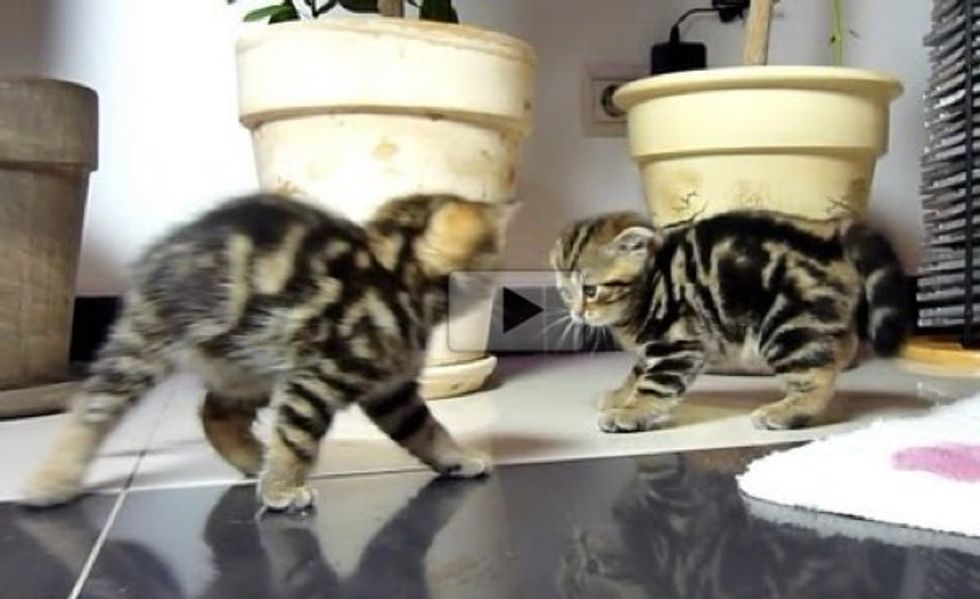 Ninja Kittens Fighting Dance Off. It's Epic!