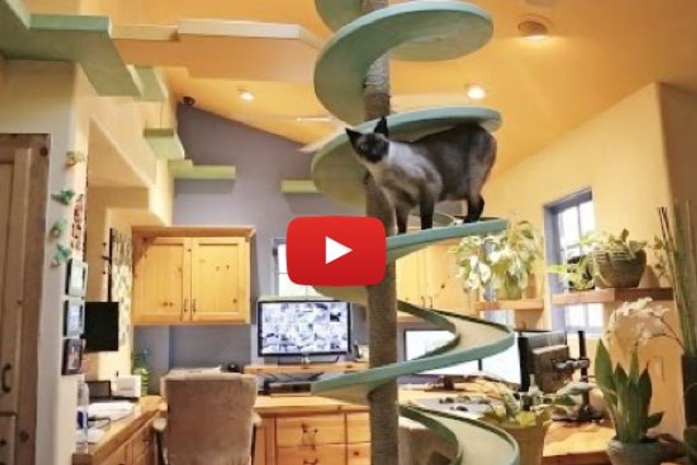 Man Turns His House Into Indoor Cat Playland for His Rescue Cats and Our Hearts Explode
