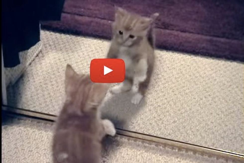 When This Ginger Kitten Discovers a Mirror and Shoes for the First Time... It's Double the Fun