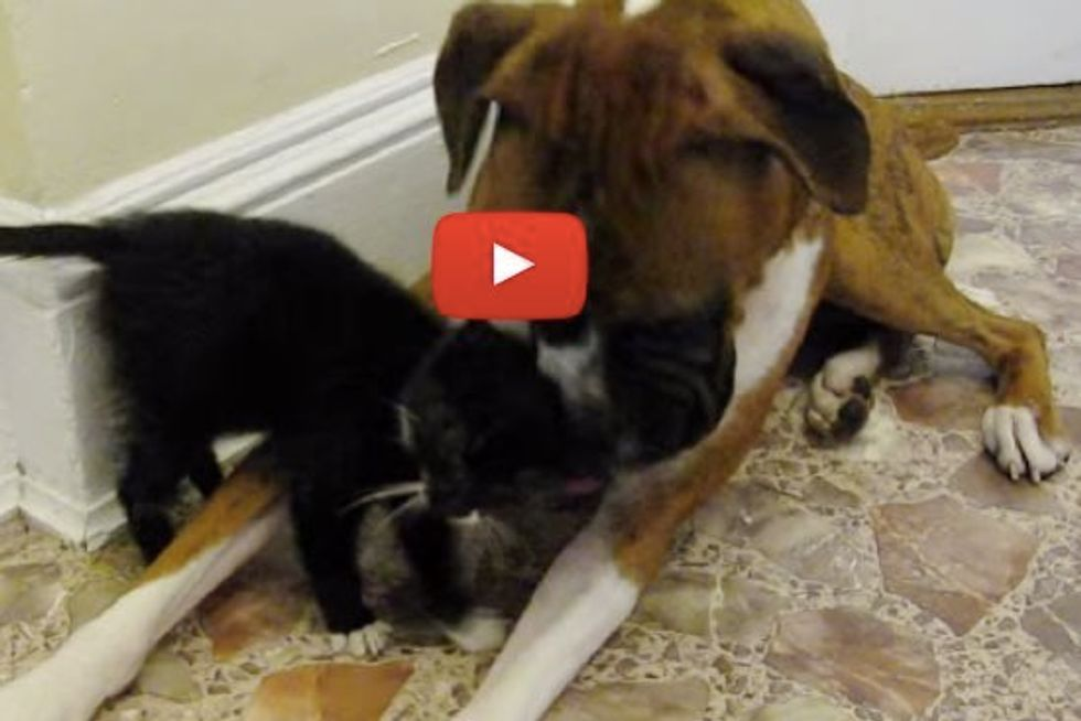 Rescue Kitten Meets Dog for the First Time. They Bond Instantly!