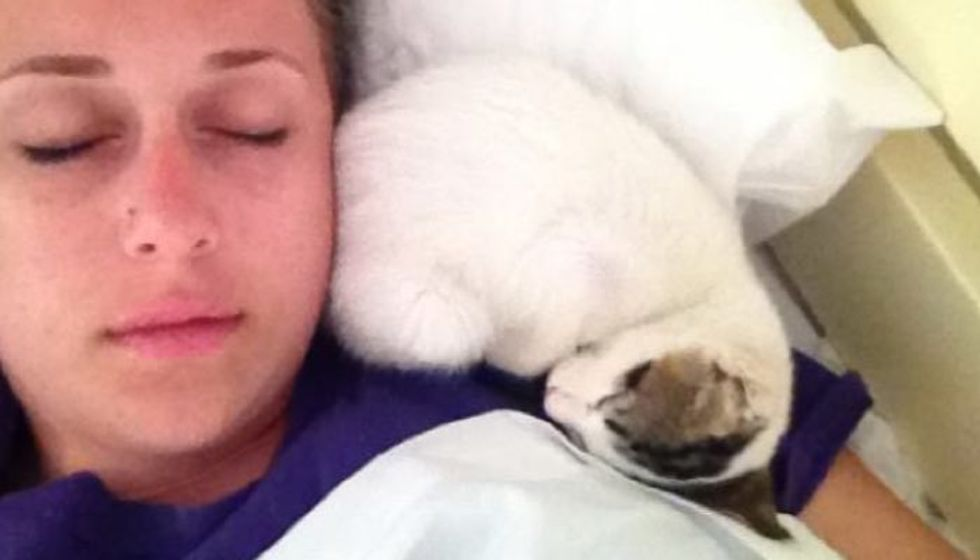 Kitten Lives at a Hotel. Travelers Let Her into Their Room and This Happens..