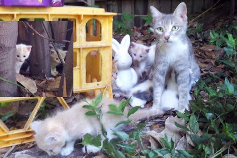 Stray Cat Mama and Her Kittens Turn a Family's Backyard into Their Kingdom