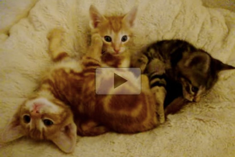 Three Kittens Turn on Their Purr Motors and Yawn Machines!
