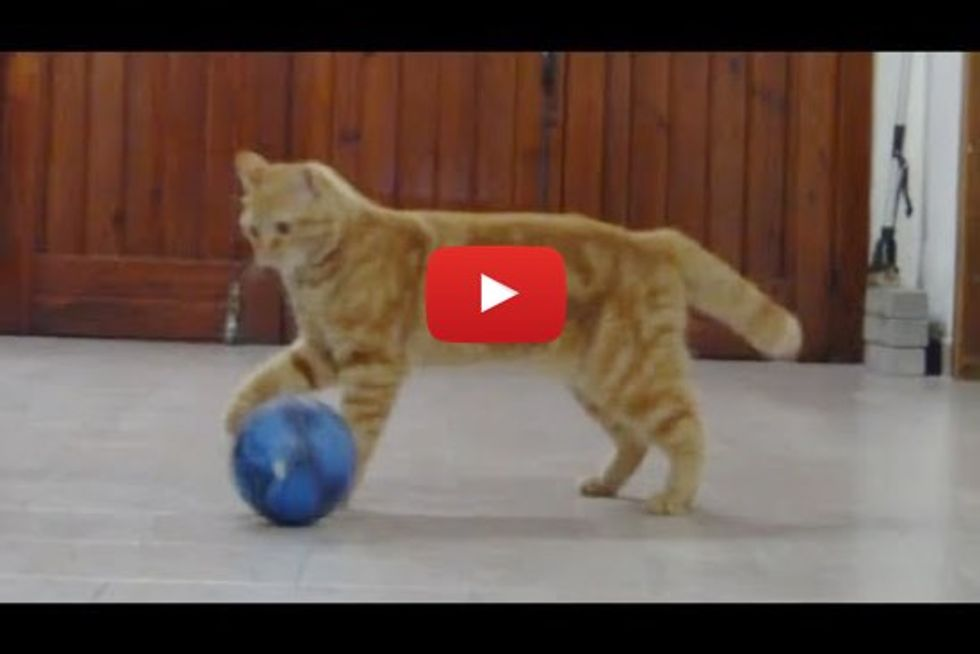Cat Playing Soccer with Her Human. She'd Make an Excellent Goalkeeper!